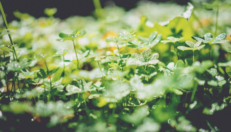 gradmalaysia_Article_Environmental Officer_2017
